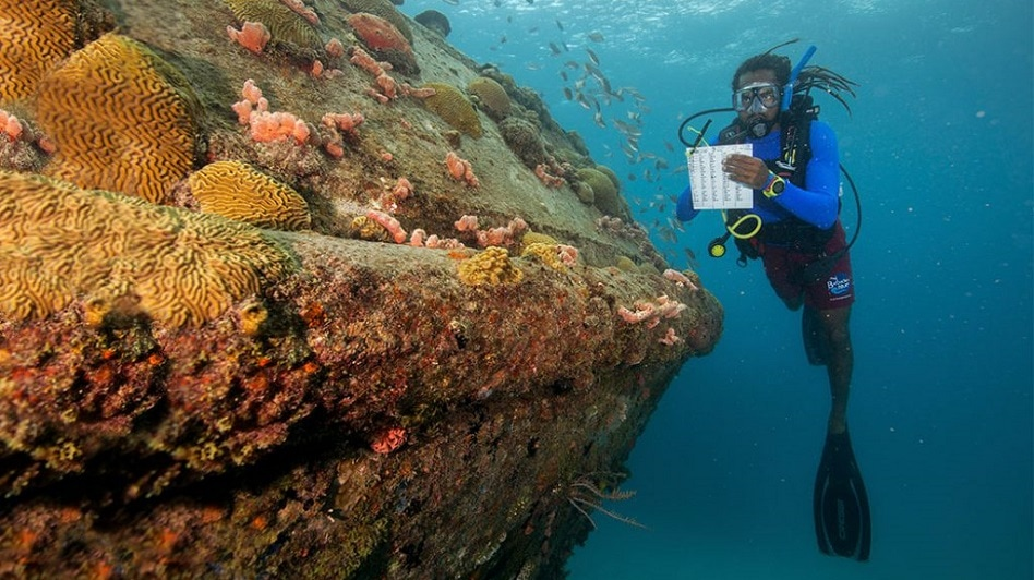 Reef Conservation Specialty: How to be a Coral Reef Conservationist